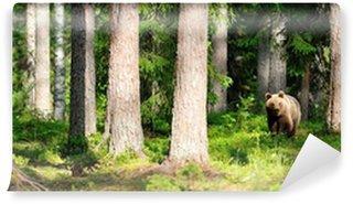 Vinylová Fototapeta Medvěd hnědý v lese panorama