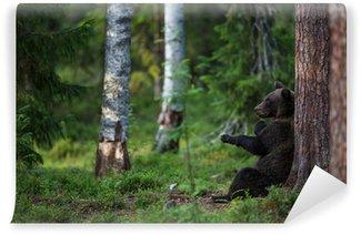 Vinylová Fototapeta Medvěd hnědý v lese