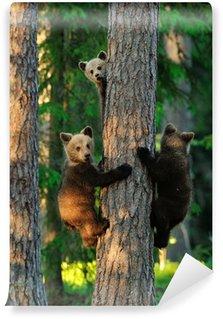 Vinylová Fototapeta Medvíďata na stromě