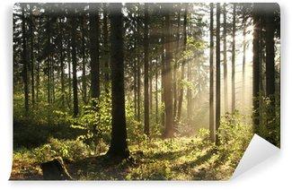 Fototapeta Vinylowa Misty bór podświetlany przez porannym słońcu
