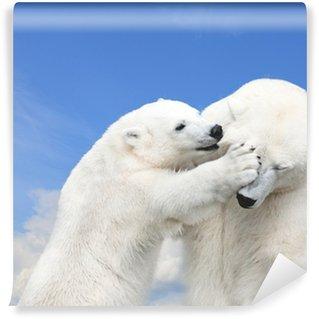 Vinylová Fototapeta Mladý roztomilý lední medvěd hrát s matkou