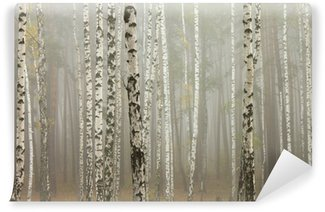 Vinylová Fototapeta Mlha v březovém lese
