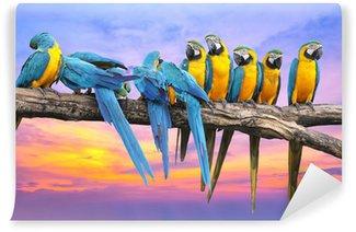 Vinylová Fototapeta Modrá a žlutá papoušek s krásnou oblohu při západu slunce