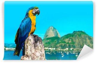 Vinylová Fototapeta Modrá a žlutá papoušek v Rio de Janeiru v Brazílii