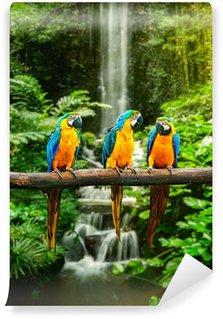 Vinylová Fototapeta Modrá a žlutá papoušek