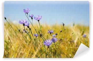 Vinylová Fototapeta Modré chrpy v pšeničném poli