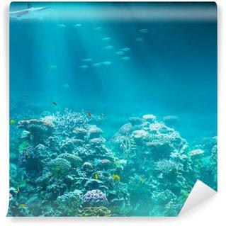 Vinylová Fototapeta Moře nebo oceánu podvodní korálový útes s žralokem