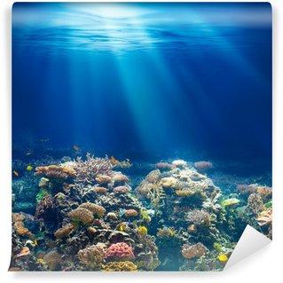 Vinylová Fototapeta Moře nebo oceánu podvodní korálový útes šnorchlování nebo potápění backgrou