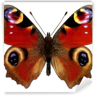 Fototapeta Vinylowa Motyl Europejskiego Peacock (pawik)