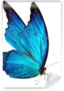 Fototapeta Vinylowa Motyl makro w tle
