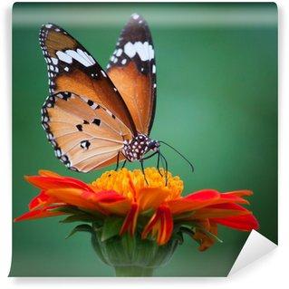 Fototapeta Vinylowa Motyl na kwiat