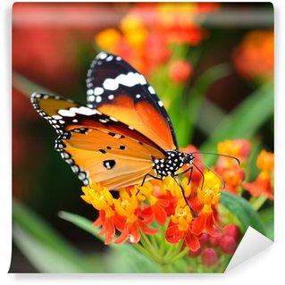 Fototapeta Vinylowa Motyl na pomarańczowy kwiat w ogrodzie