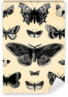 Fototapeta Winylowa Motyle