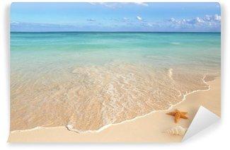 Vinylová Fototapeta Mušle hvězdice tropických písku tyrkysový Karibiku