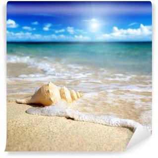 Vinylová Fototapeta Mušle na pláži (mělké DOF)