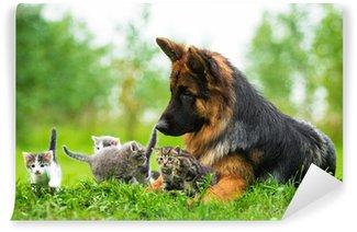 Vinylová Fototapeta Německý ovčák a pět malá koťata