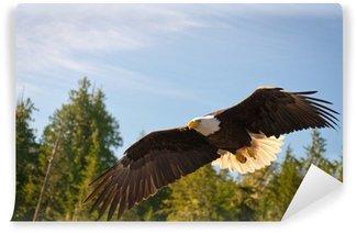 Vinylová Fototapeta North American Bald Eagle v polovině letu loví podél řeky