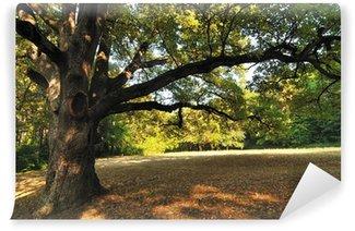 Vinylová Fototapeta Oak Tree v parku