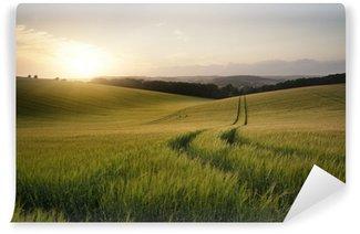 Fototapeta Vinylowa Obraz Letni krajobraz pola pszenicy o zachodzie słońca piękne l