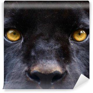 Vinylová Fototapeta Oči černé pantera