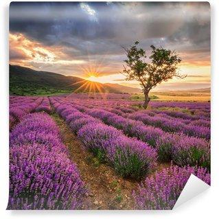 Vinylová Fototapeta Ohromující krajina s levandulí pole při východu slunce