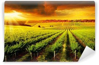 Vinylová Fototapeta Ohromující Vineyard Sunset