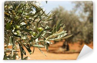 Vinylová Fototapeta Olivových hájů a olivy na pobočce