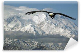 Vinylová Fototapeta Orel bělohlavý v horách