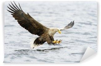 Vinylová Fototapeta Orel mořský lov ryb.
