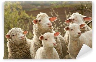 Vinylová Fototapeta Ovce a jehňata na pastvině