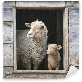 Vinylová Fototapeta Ovce a malé Ewe, v dřevěné stodoly okně