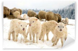 Vinylová Fototapeta Ovce skudde s jehněčím jíst seno