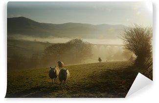 Vinylová Fototapeta Ovce v mlze