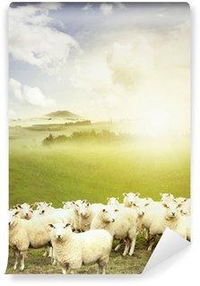Vinylová Fototapeta Ovce