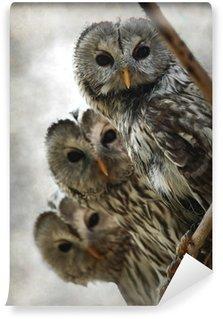 Vinylová Fototapeta Owl