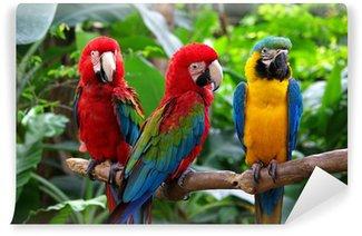 Vinylová Fototapeta Papoušci v jihovýchodní Asii