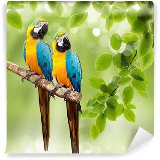 Vinylová Fototapeta Papoušek na stromě