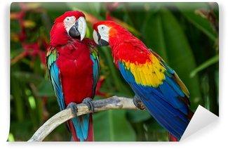 Vinylová Fototapeta Pár Green-Winged a Scarlet macaws v přírodě okolí