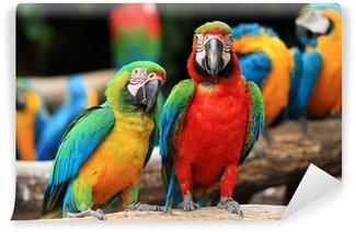 Vinylová Fototapeta Pár Scarlet papoušek a Blue-a-žlutý papoušek (ara ararauna