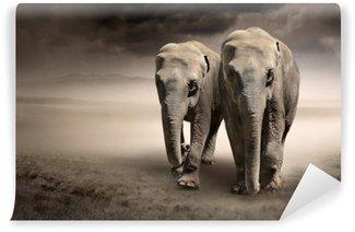 Vinylová Fototapeta Pár slonů v pohybu