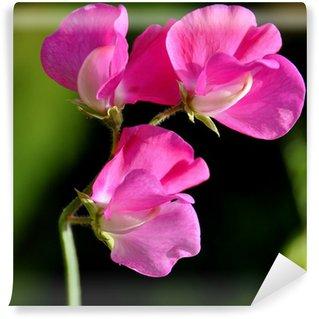 Fototapeta Winylowa Pea zapach kwiatu
