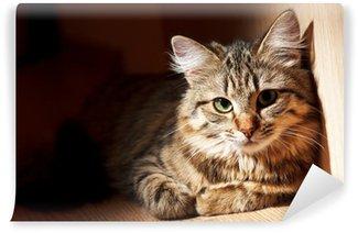 Vinylová Fototapeta Pěkná kočka