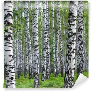 Vinylová Fototapeta Pěkné letní březového lesa