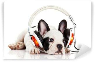 Vinylová Fototapeta Pes poslouchá hudbu se sluchátky na uších izolovaných na bílém backgro