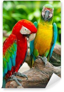Vinylová Fototapeta Pestré pár papoušek sedí na stromě