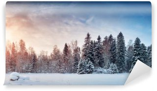 Fototapeta Winylowa Piękne drzewa w zimowy krajobraz w późnym wieczorem w śniegu