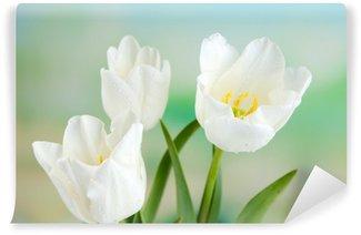 Fototapeta Vinylowa Piękne tulipany na jasnym tle