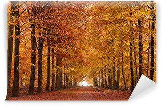 Vinylová Fototapeta Písek lane se stromy na podzim