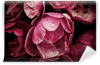 Vinylová Fototapeta Pivoňka květiny