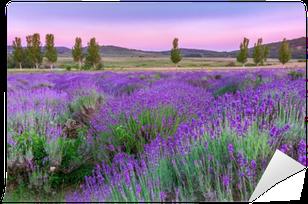 Fototapeta Pixerstick Zachód słońca nad polem letnich lavender w Tihany, Węgry